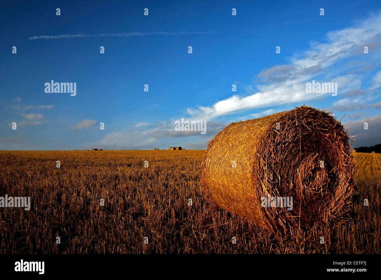 Blue skies over round hay bales on harvested fields in North Yorkshire. - Stock Image