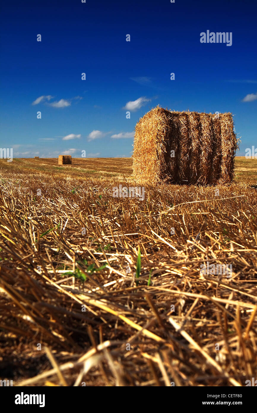 Round hay bales on harvested fields in North Yorkshire. - Stock Image