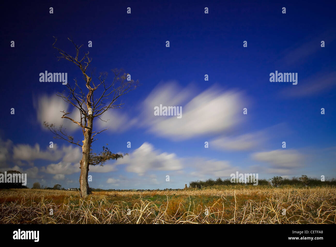 Blue skies over a leafless tree and field Oxford. - Stock Image