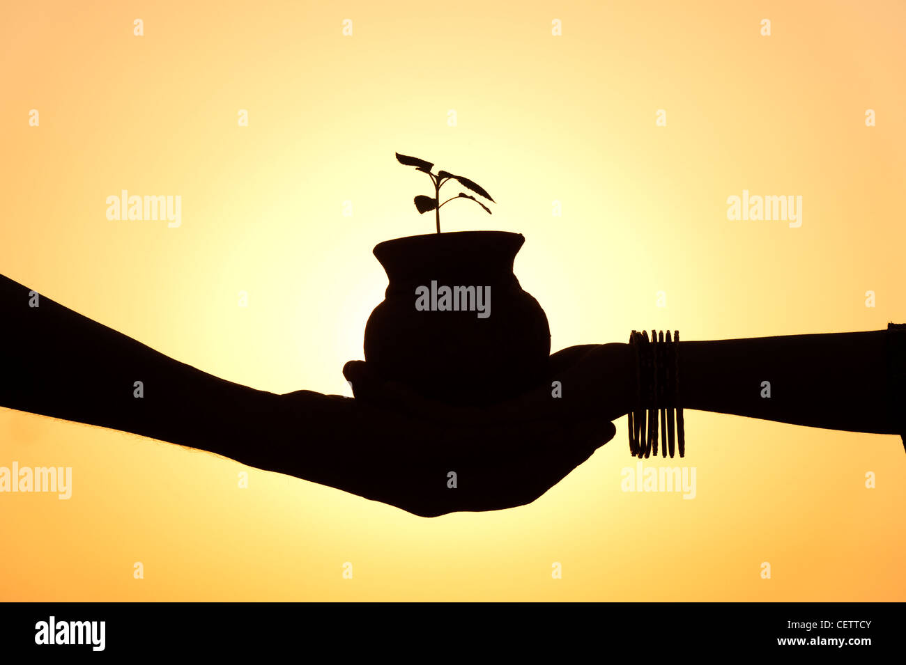 Indian man and girls hands holding a plant seedling in a pot. Silhouette. India - Stock Image