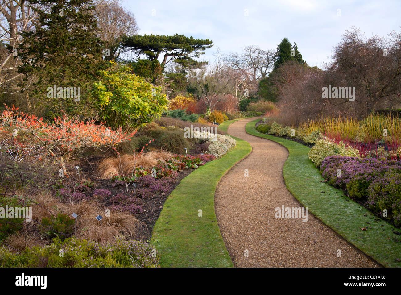 Winter Walk Cambridge University Botanical Gardens - Stock Image