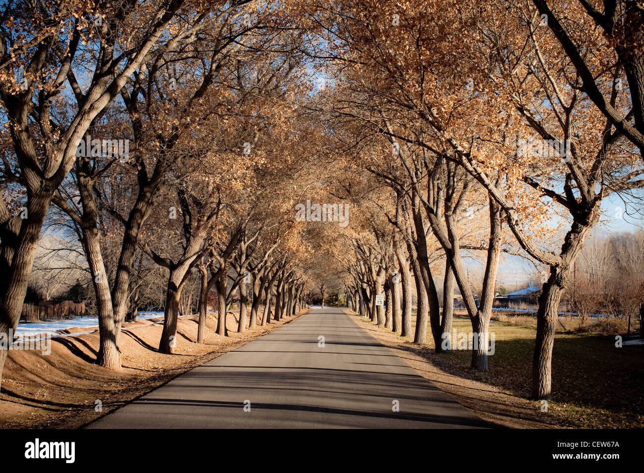 Tree lined road with shadows cast on pavement Stock Photo