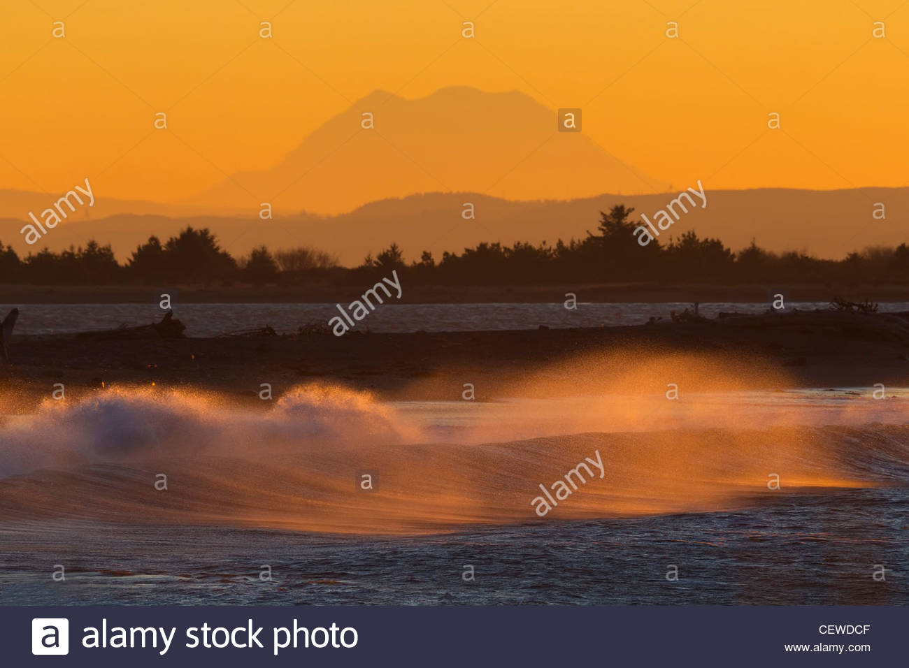 Large Pacific Ocean waves crash into the shoreline of Damon Point in Ocean Shores, Washington at sunrise. - Stock Image