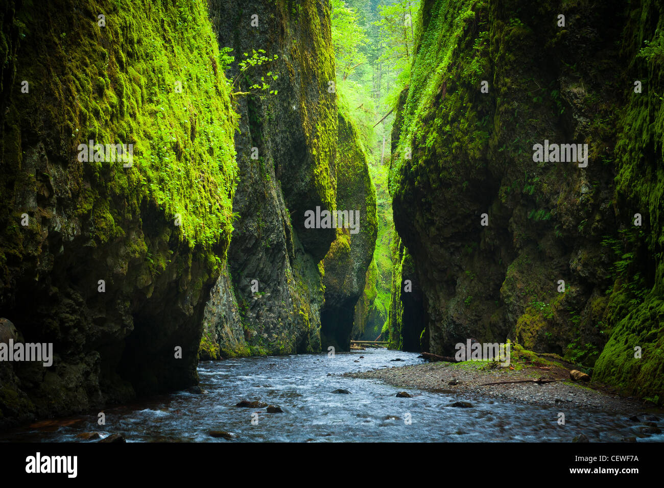 the oneonta gorge in the columbia river gorge oregon. Black Bedroom Furniture Sets. Home Design Ideas
