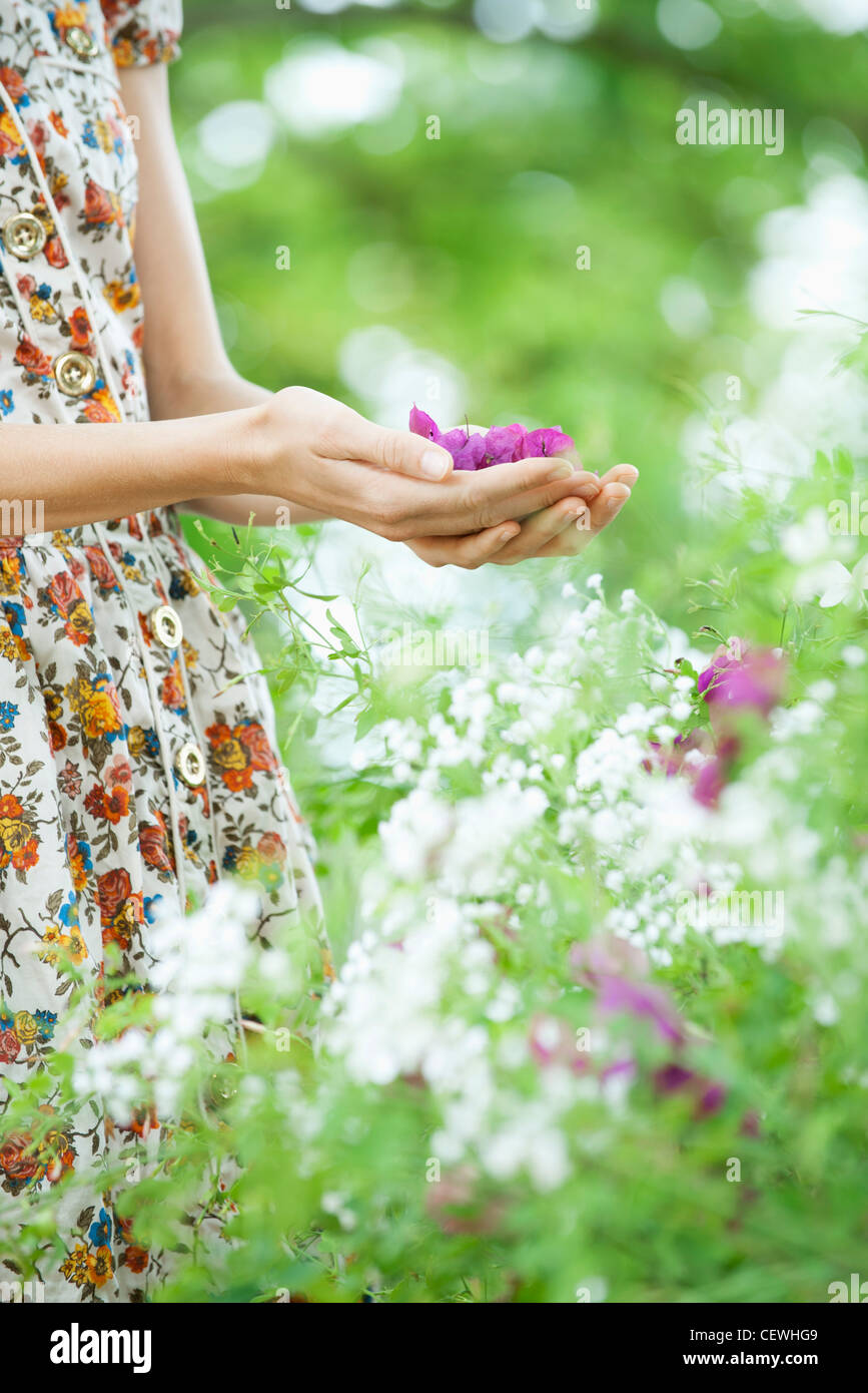 Woman holding purple flowers in cupped hands, mid section - Stock Image