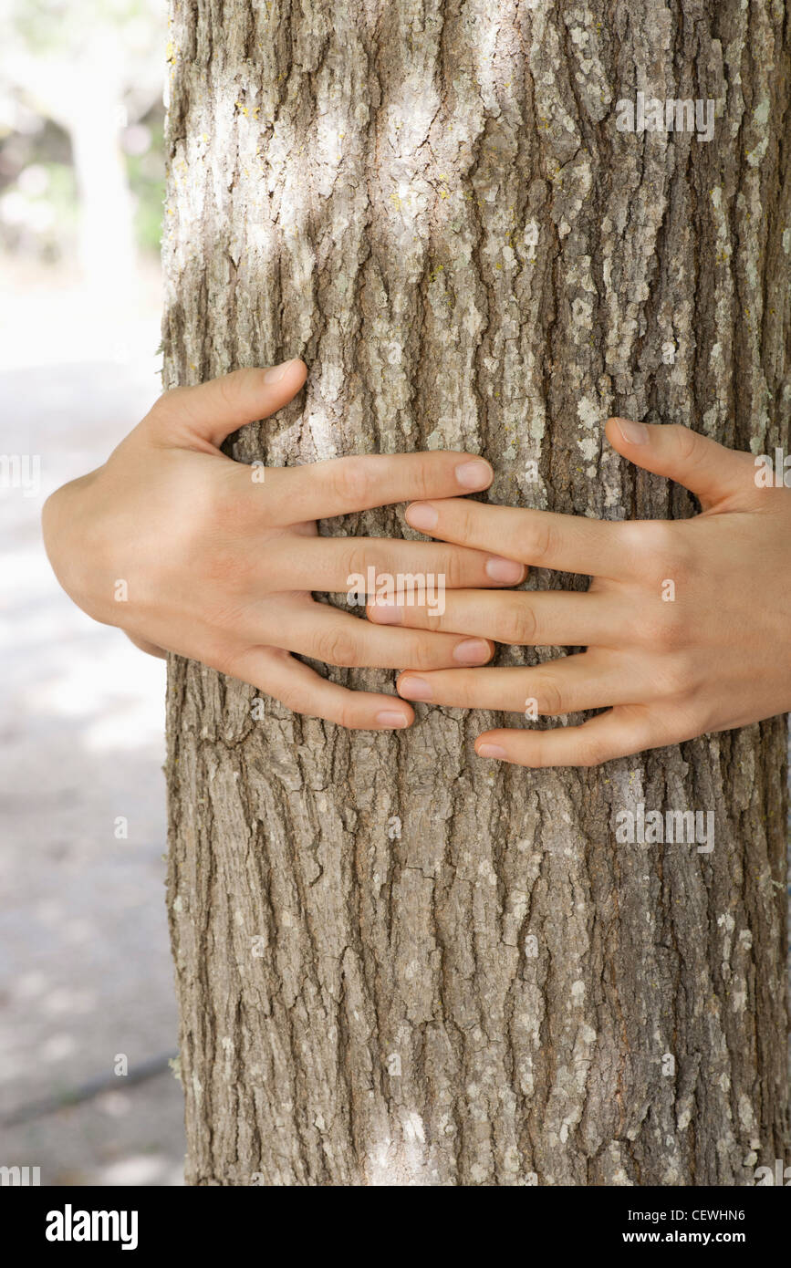 Hands hugging tree trunk, cropped Stock Photo