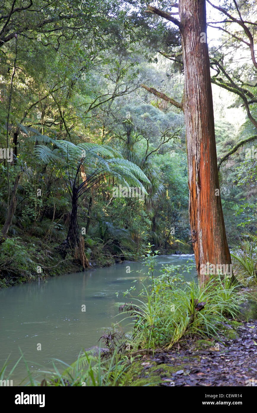 The Hatea River, just below the Whangarei Falls, North Island, New Zealand. Stock Photo