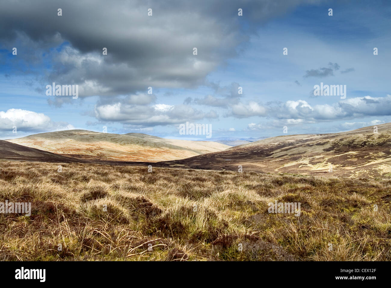 Open grassland in Drumlanrig Country Estate. - Stock Image