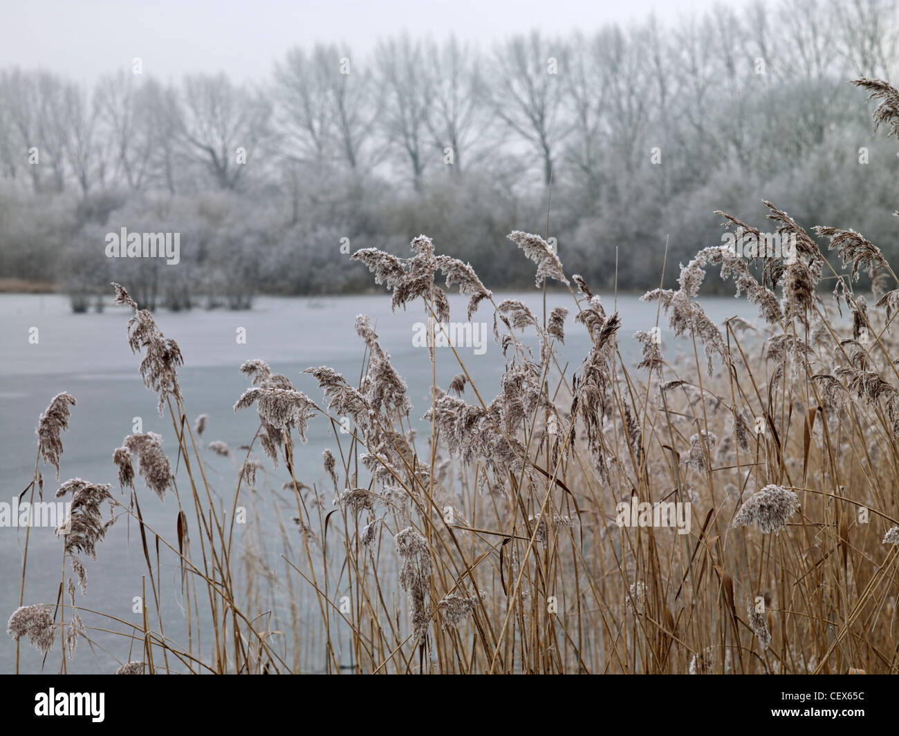 Frosty grass at Swillbrook Lakes, one of the most important nature conservation sites in the Cotswold Water Park. - Stock Image