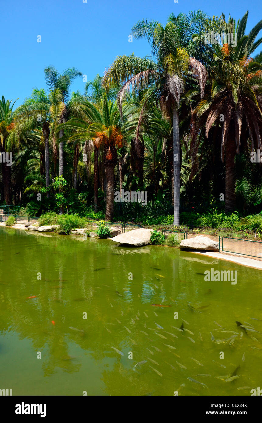 Tropical garden with water pool - Stock Image