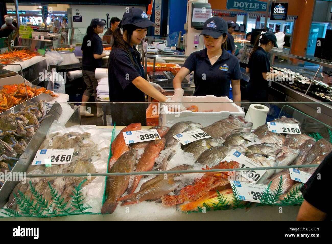 Red Morwong Fish Stock Photos & Red Morwong Fish Stock