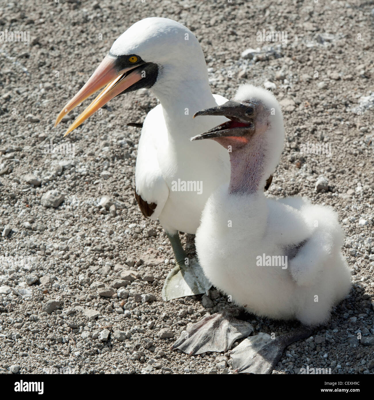 Talking Bird Stock Photos & Talking Bird Stock Images - Alamy