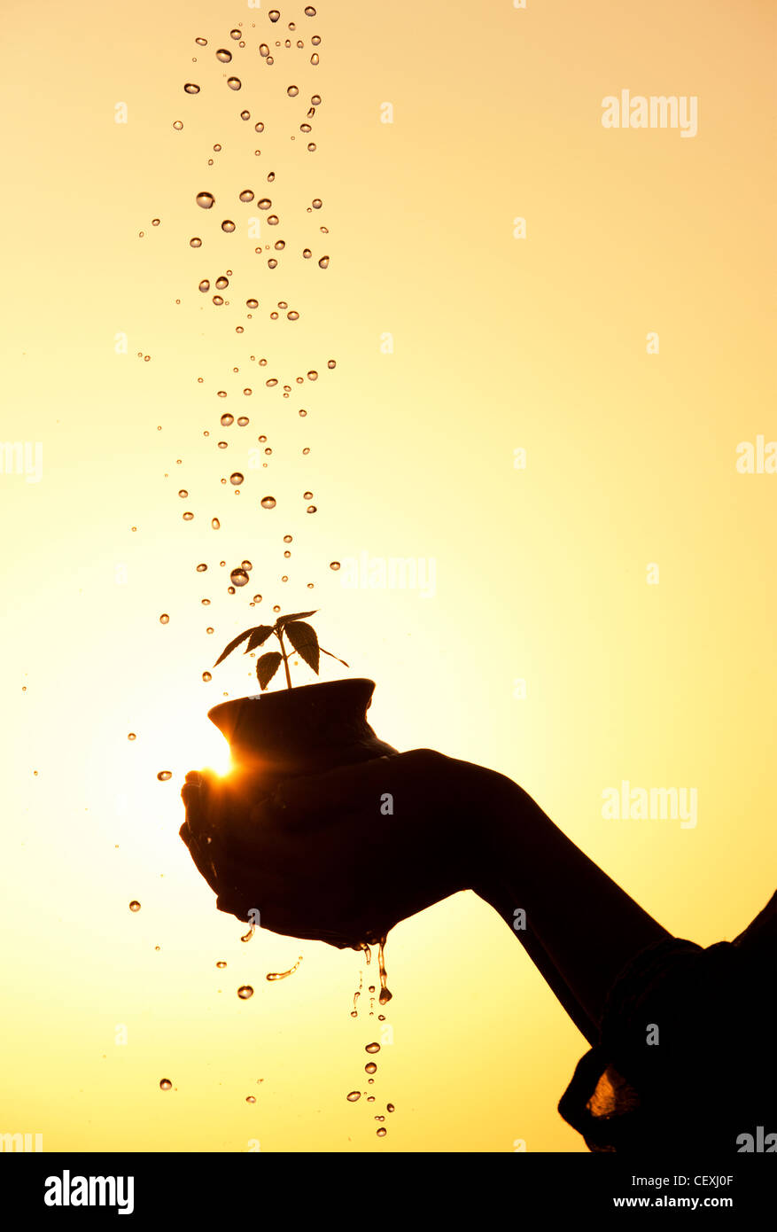 Indian teenage girl holding a plant seedling in a clay pot with water being poured over it. Silhouette. India - Stock Image