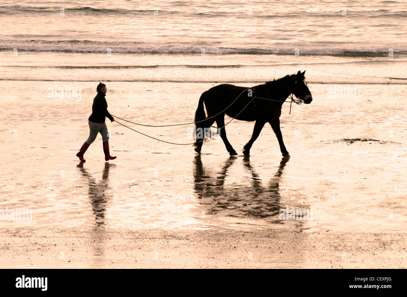 Lady walking horse on long reins by seashore - Stock Image