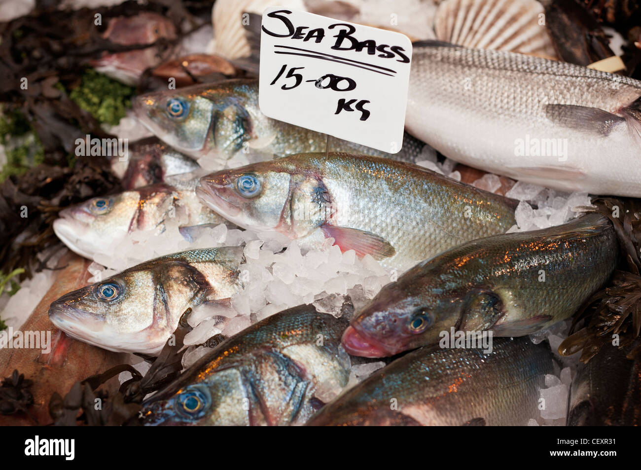 Fresh Sea Bass for sale on a fishmonger's market stall at Borough Market, Southwark South East London UK - Stock Image