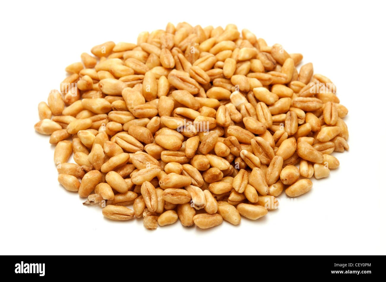 Whole wheat grains on a white background - Stock Image