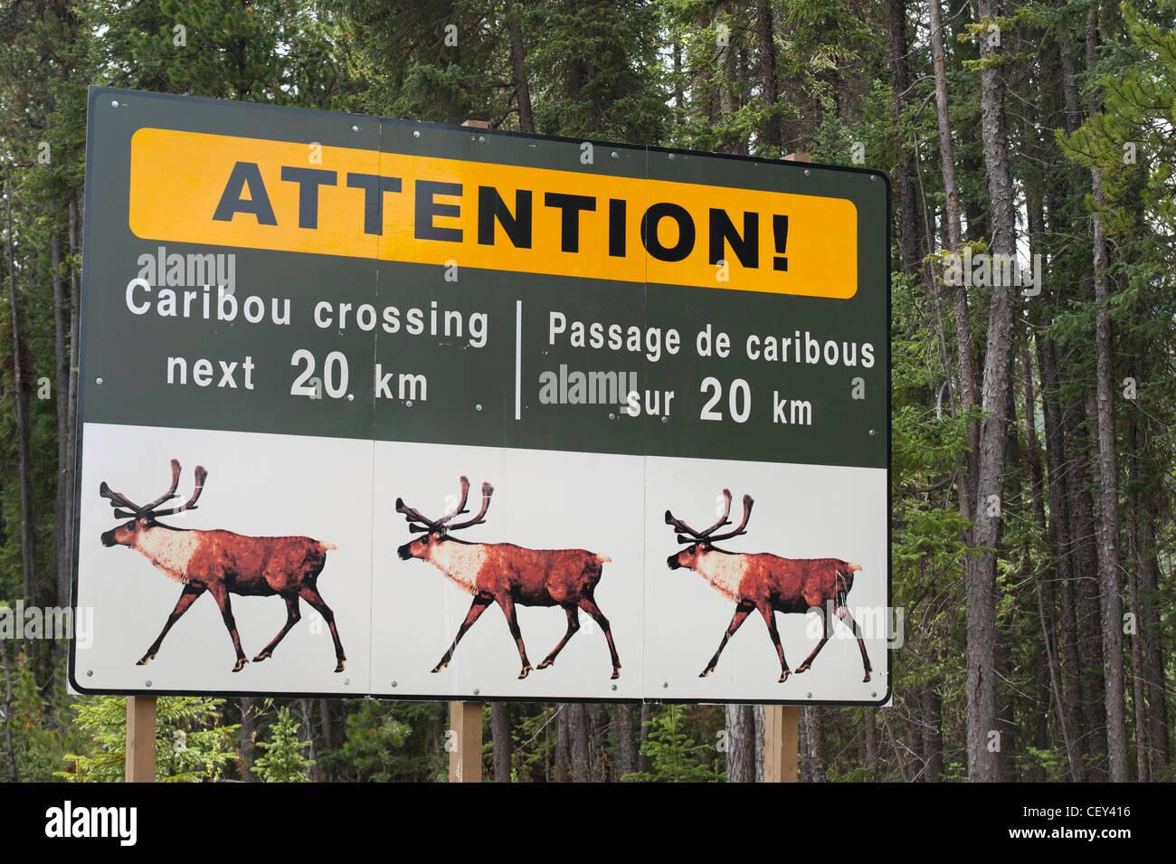 sign to warn of caribou (rangifer tarandus) crossing; jasper, alberta, canada - Stock Image
