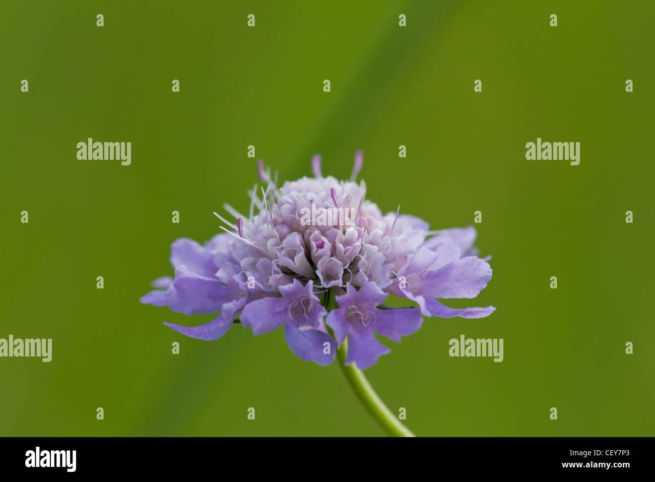 Blüte - Stock Image