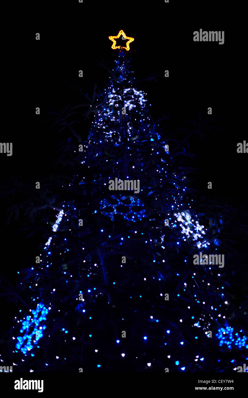 Real Christmas tree with blue lights and star at the top - Stock Image