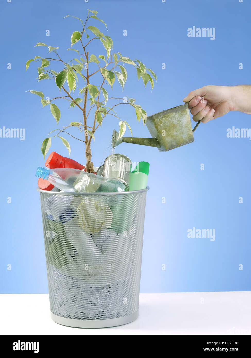 Plantlet growing in trash bin full of domestic garbage being watered with water can over blue background - Stock Image