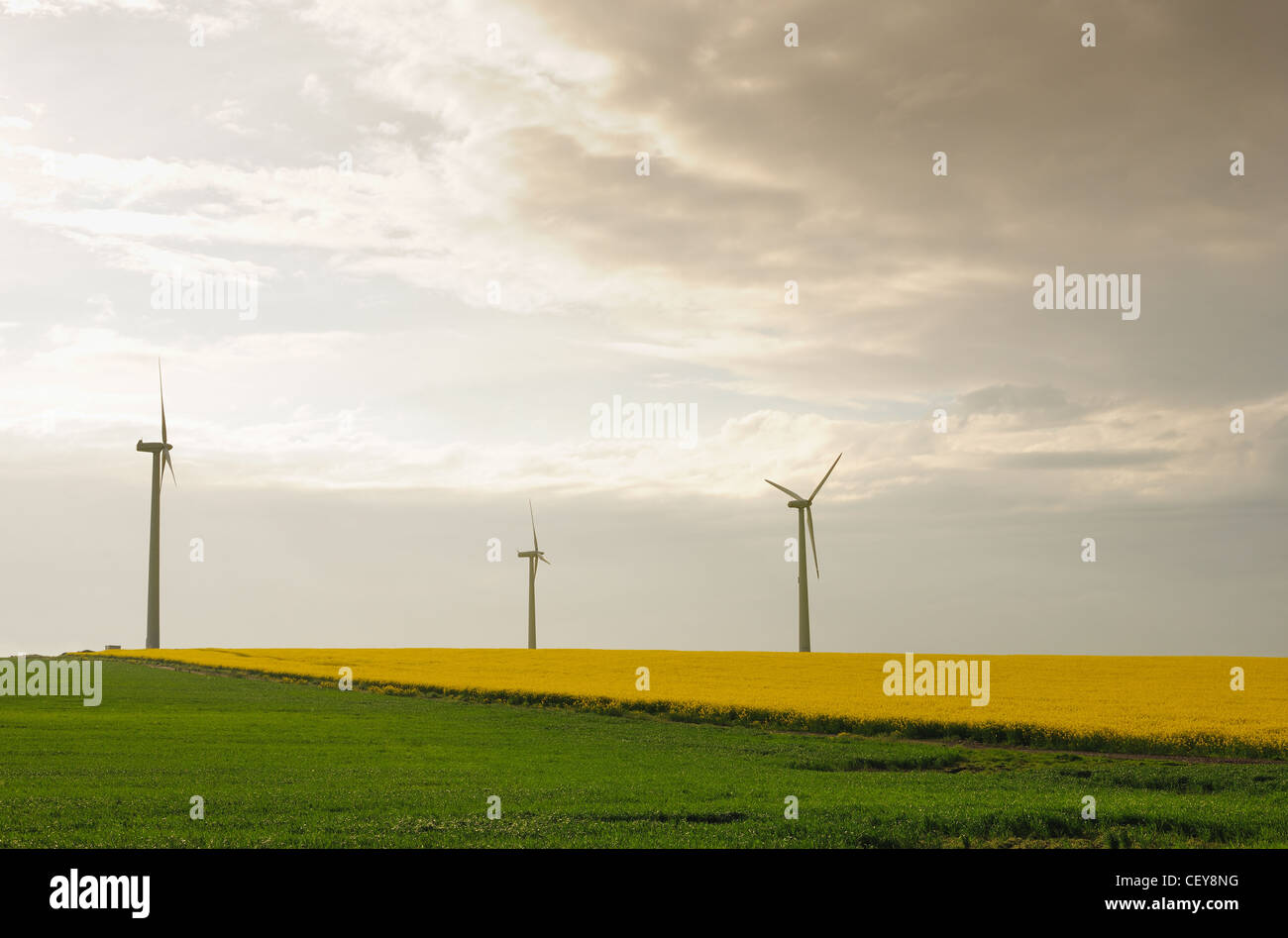 Power generation propellers in a spring meadow at sunset - Stock Image