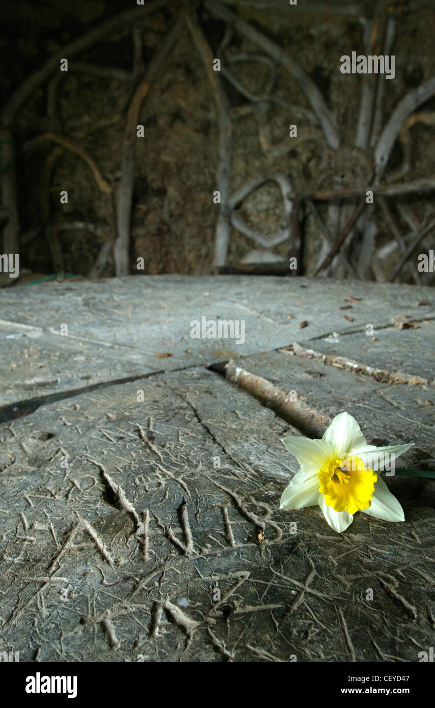 A daffodil and graffiti scratched into a wooden table - Stock Image