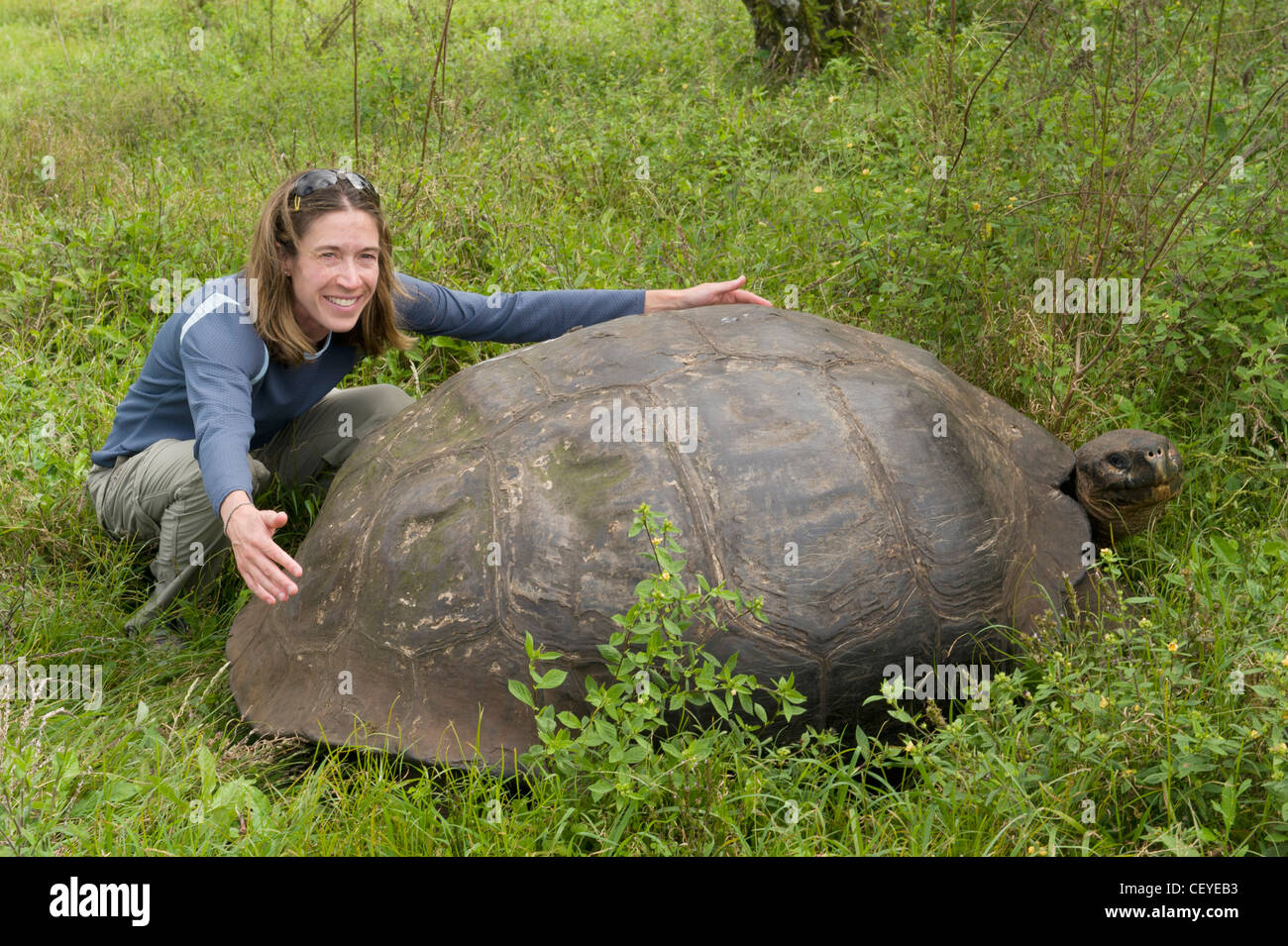 a man holds out his arms to span the width of a tortoise shell; galapagos equador - Stock Image