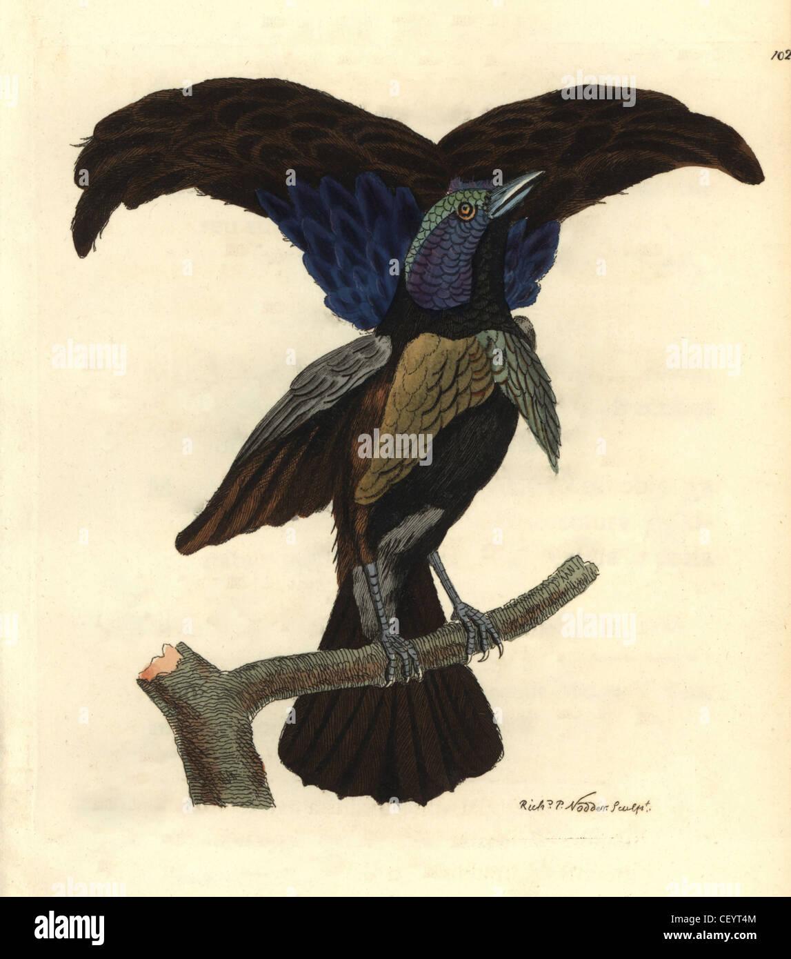 Histoire Naturelle Bird Stock Photos & Histoire Naturelle Bird Stock ...