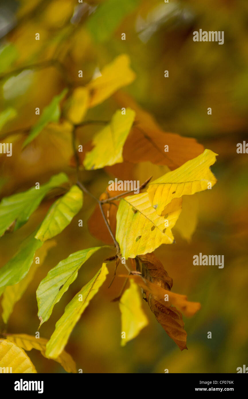 Herbst 2 Stock Photo