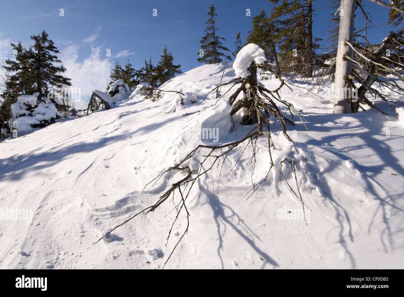 Winter landscape. National park Taganay. South Ural mountains. Taiga. Russia. - Stock Image