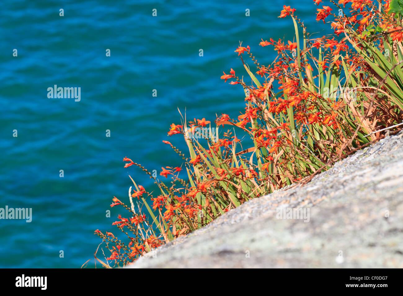 Colorful coastal vegetation - Stock Image