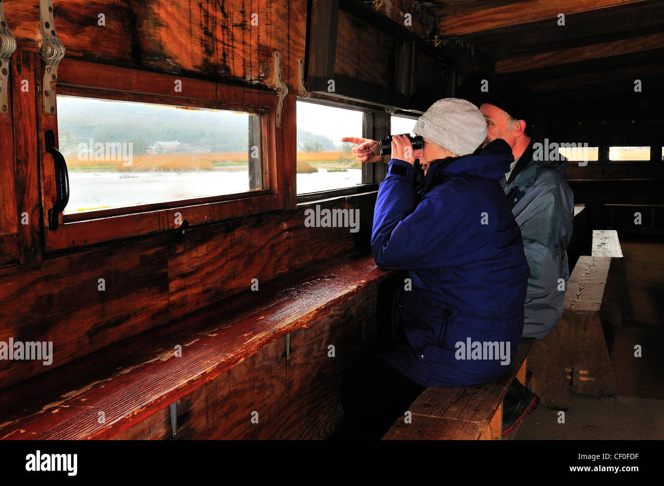 Two bird watchers  looking out from a public hide at Leighton Moss Leighton Moss RSPB reserve Leighton  Moss - Stock Image