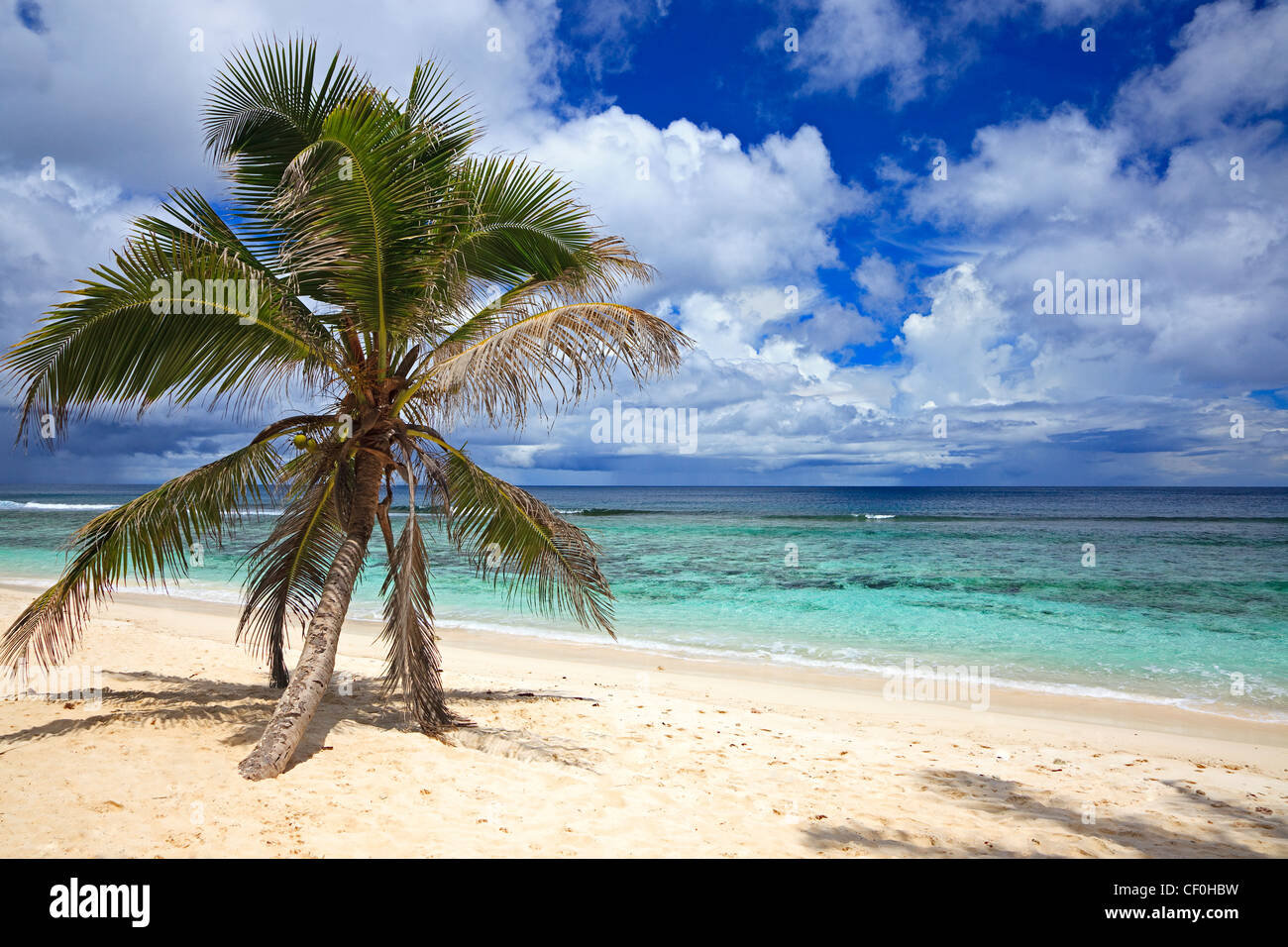 Bel Ombre beach on Mahe Island, Seychelles, with a palm tree and Indian Ocean - Stock Image