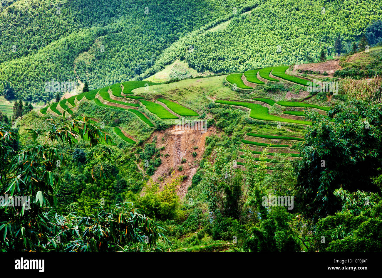 Rice terraces being farmed on th side of a hill near Sapa, Vietnam - Stock Image