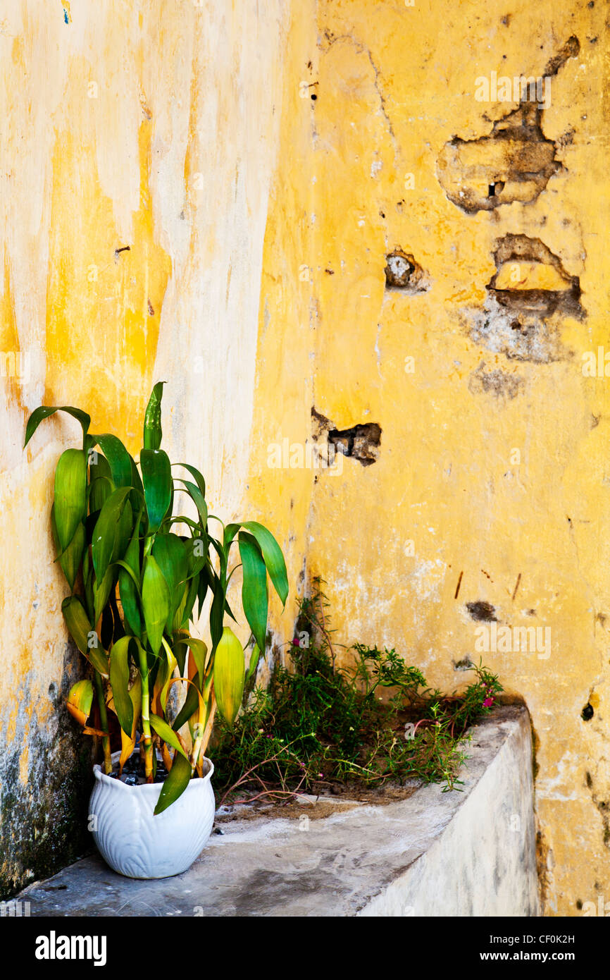 Plant pot next to a crumbling wall in Hoi An, Vietnam Stock Photo ...