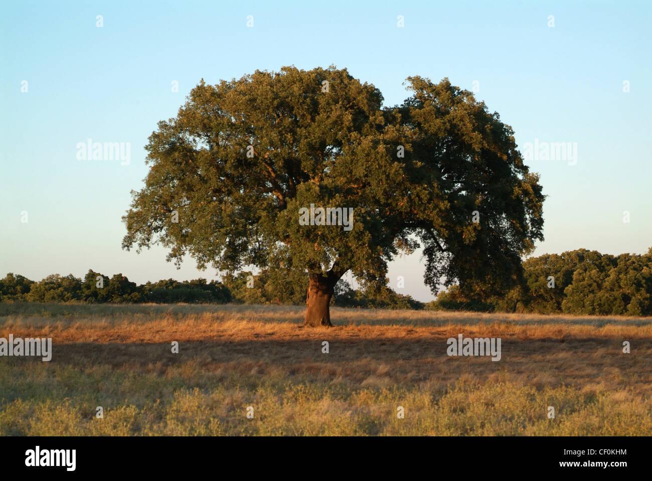 Portugal, Alentejo, tree on the top of the hill Stock Photo