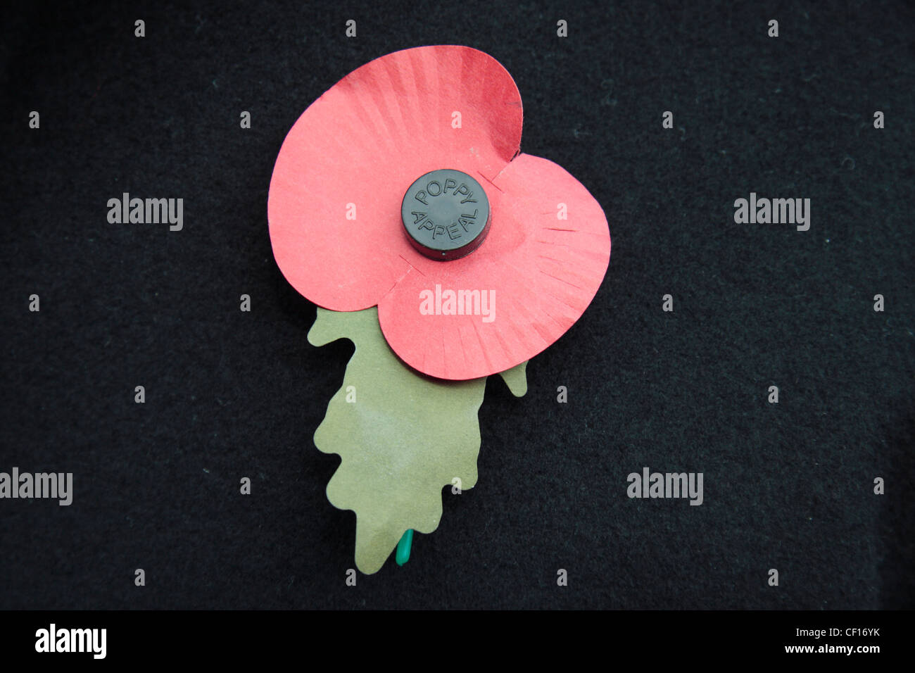 An English artificial Royal British Legion Red Poppy on a dark jacket background.  This shows the green leaf pointing - Stock Image