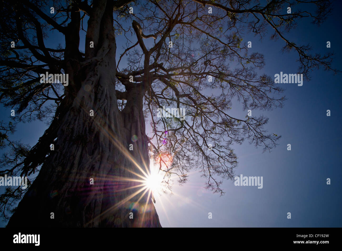 The Sunlight Shines Behind A Tree Trunk; Kenya - Stock Image