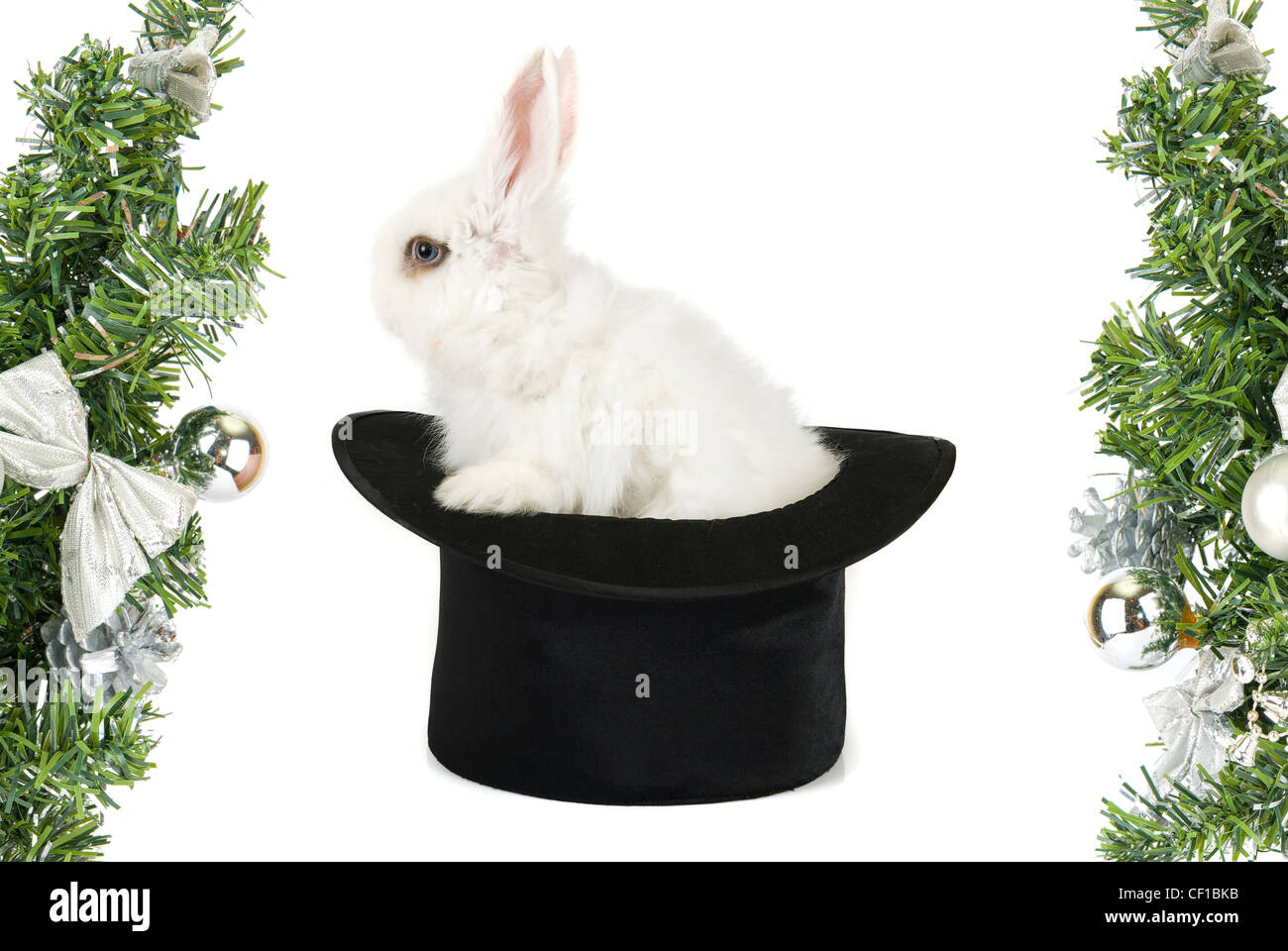 White Rabbit Black Hat Symbol Stock Photos White Rabbit Black Hat