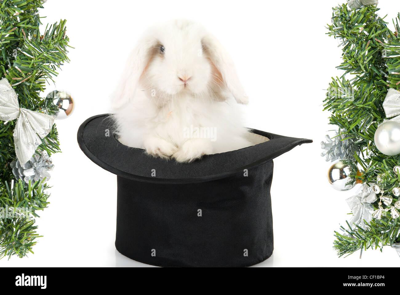 Rabbit Top Hat Magic Wand Stock Photos Rabbit Top Hat Magic Wand