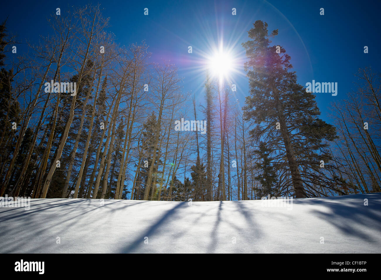 Sunlight Shines Over The Trees As They Cast Shadows Onto The Snow; New Mexico United States Of America - Stock Image