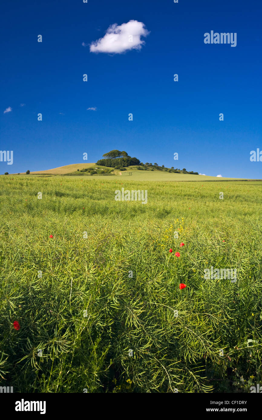 Woodborough Hill in the middle of Pewsey Vale on the North Wessex Downs. - Stock Image
