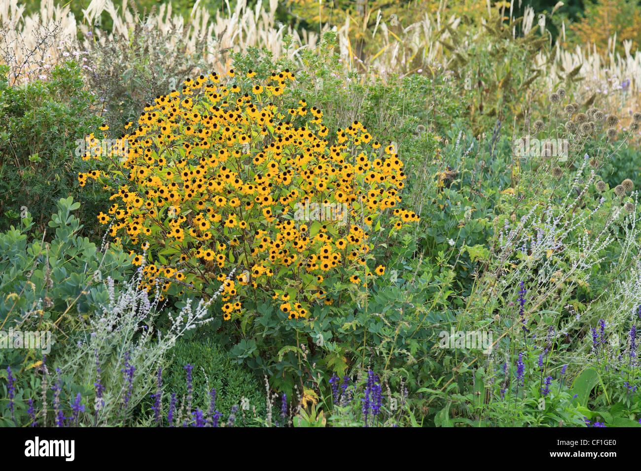 In fall, perennials, Rudbeckia, grasses ...(France, Chaumont-sur-Loire, Festival International des Jardins) - Stock Image