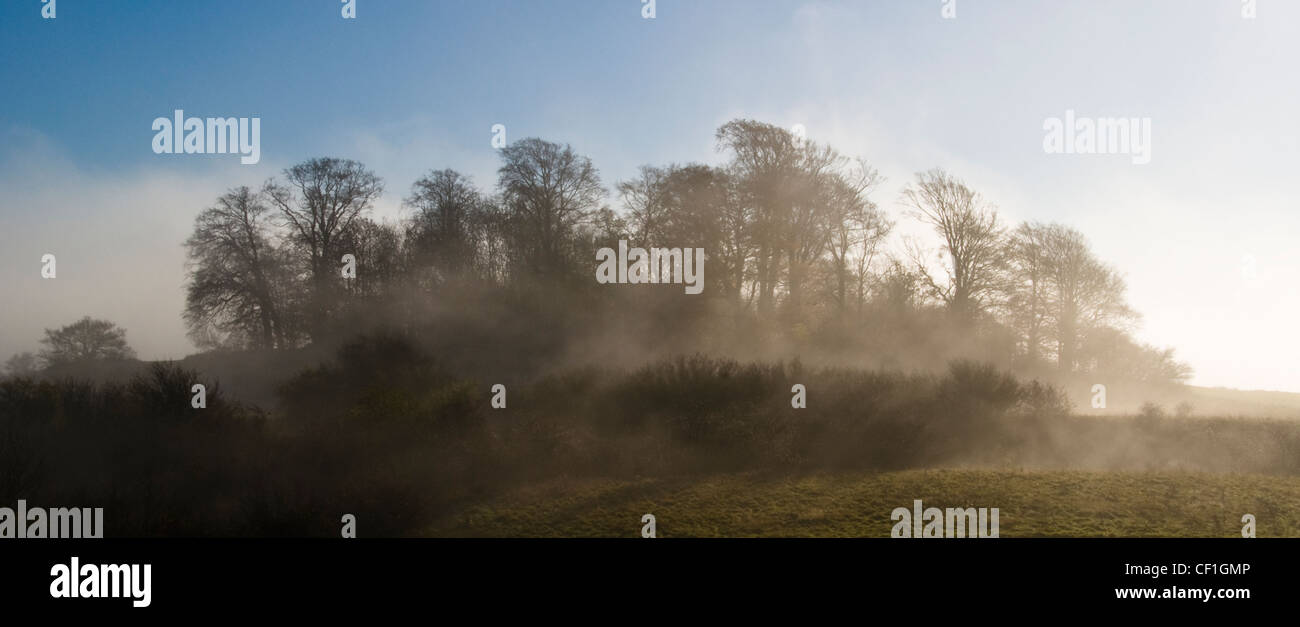 Wittenham Clumps,Oxfordshire on a misty morning - Stock Image