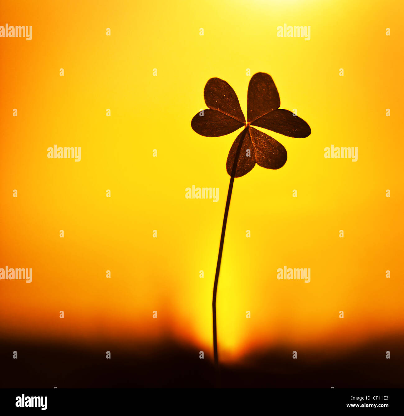 Clover at sunset, silhouette of shamrock plant over warm yellow sky background, abstract floral image, spring nature - Stock Image