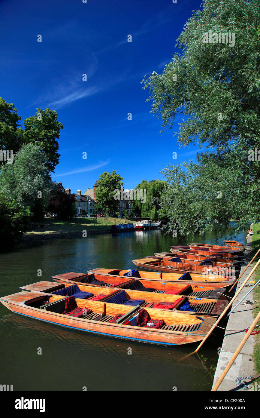 Punts on the river Cam Cambridge City, Cambridgeshire, England, UK - Stock Image