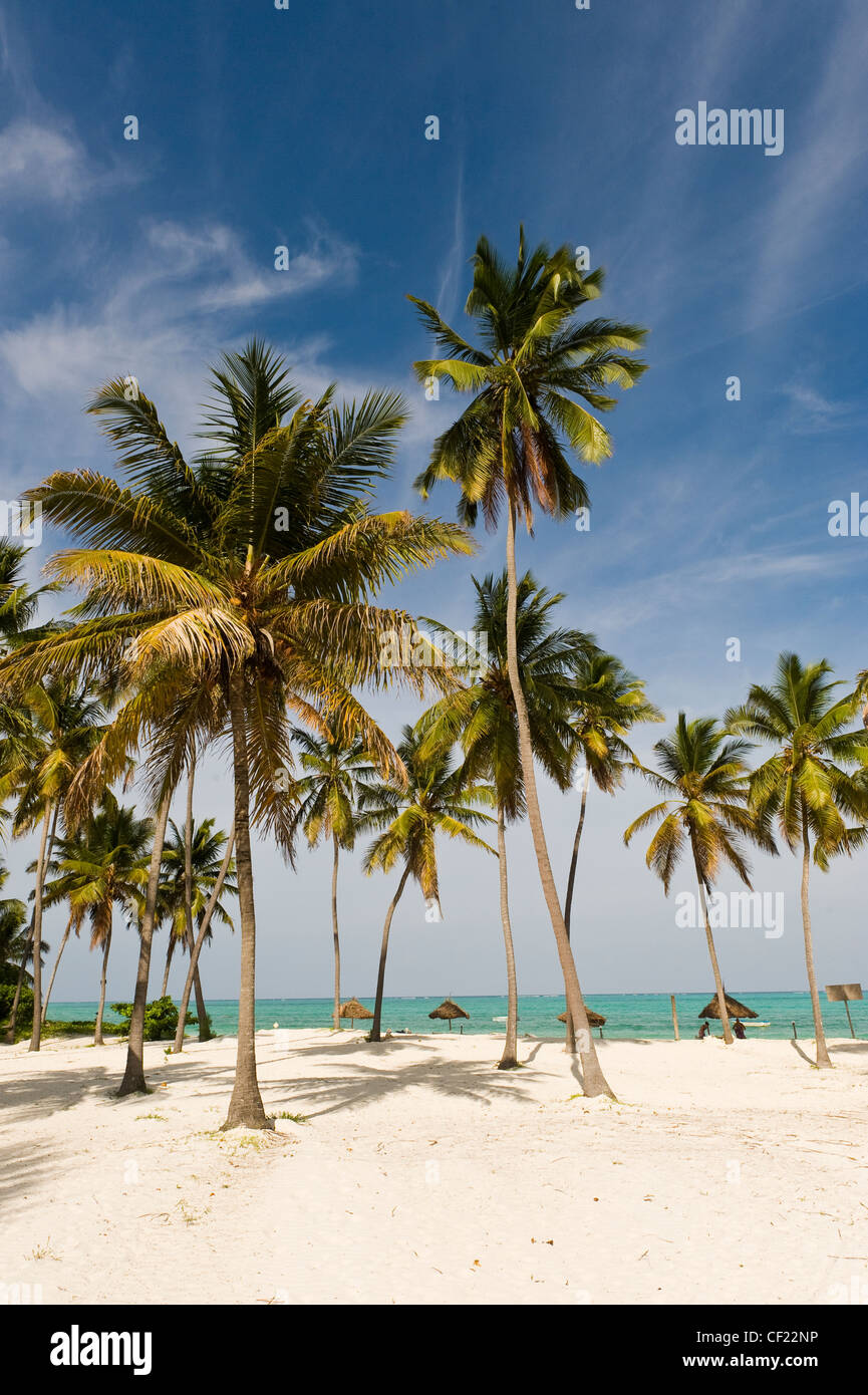 Coconut palms at the beach of Paje, Zanzibar, Tanzania Stock Photo