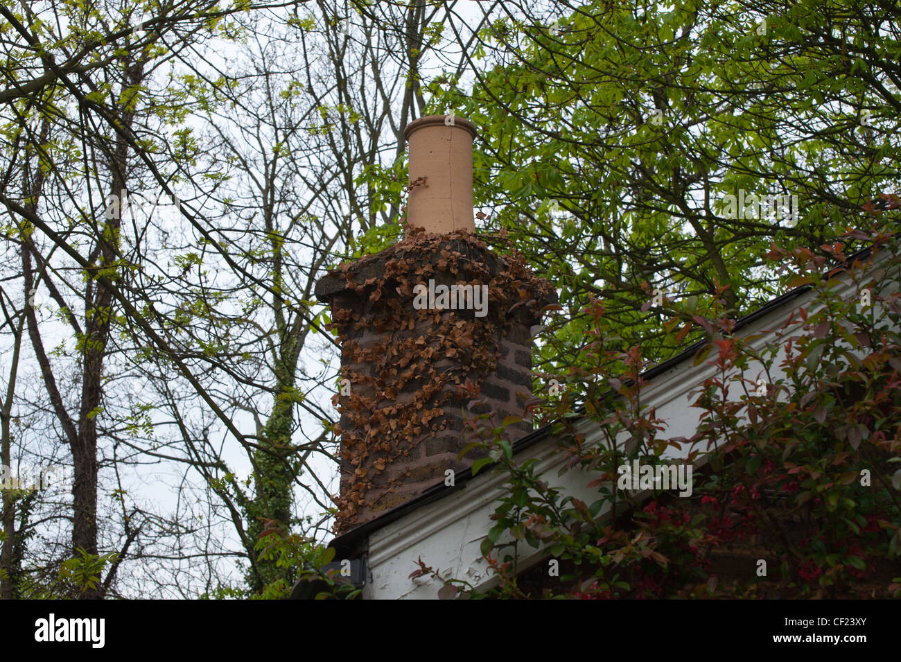 Chimney Pot with dead plant - Stock Image