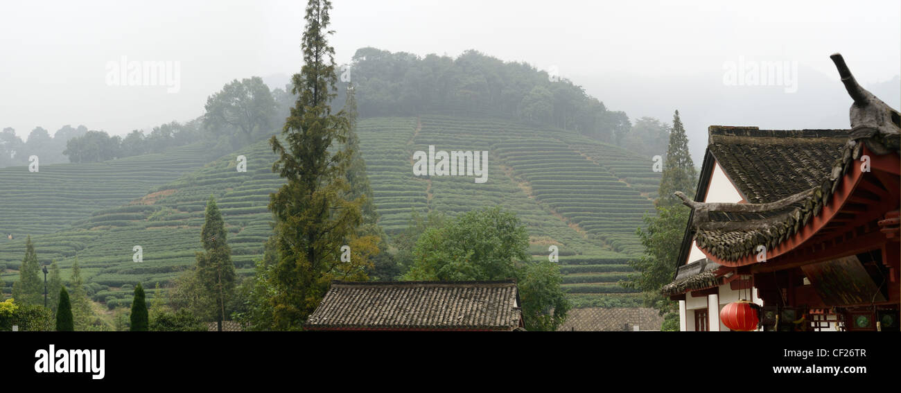 Panorama of Mei Jia Wu tea plantation in the Lung Ching Dragon Well area of Hangzhou Peoples Republic of China - Stock Image