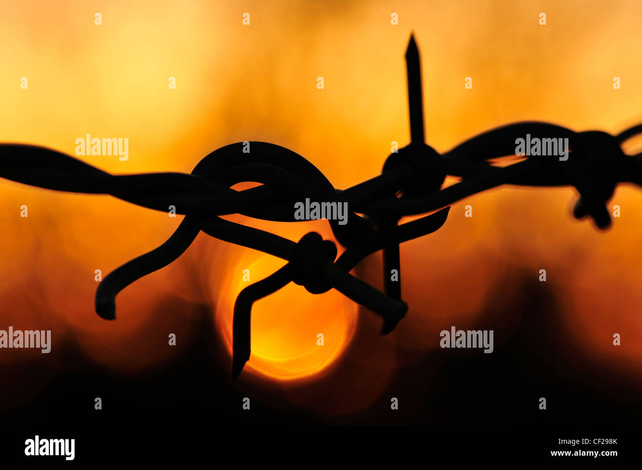 Barbed wire at sunset in Sahuarita, Arizona, USA. Stock Photo